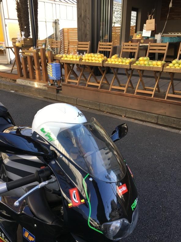 新松戸の北限レモン